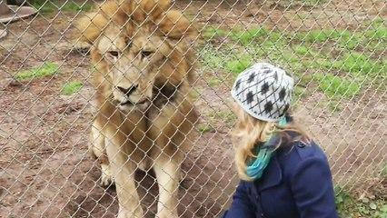 Un lion qui fait peur à une journaliste