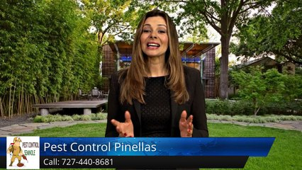Seminole Termite & Pest Control Review of  Pest Control Pinellas Seminole FLGreat Five Star Re...