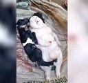 Une chèvre donne naissance à une étrange créature dans une ferme des  Philippines