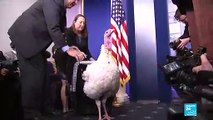 US - President Donald Trump pardons two turkeys, Peas and Carrots for Thanksgiving