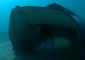 Stingray Caught on Camera Devouring Spider Crab