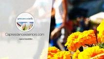 Investir dans un T3 en Résidence avec Services pour Senior à COMBS LA VILLE
