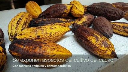 Museo del Chocolate en México