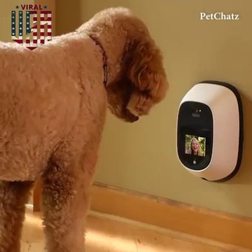 Make your dog talk to you Now!!!!!!!!