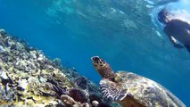 Chasing turtles in the Gili islands