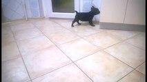 French Bulldog Puppies for Sale Miami in FL, French Bulldog Puppies for Sale Jacksonville in FL