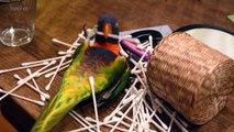 Cute Parrots  Funny and Talented Parrots Part 1 Funny Pets
