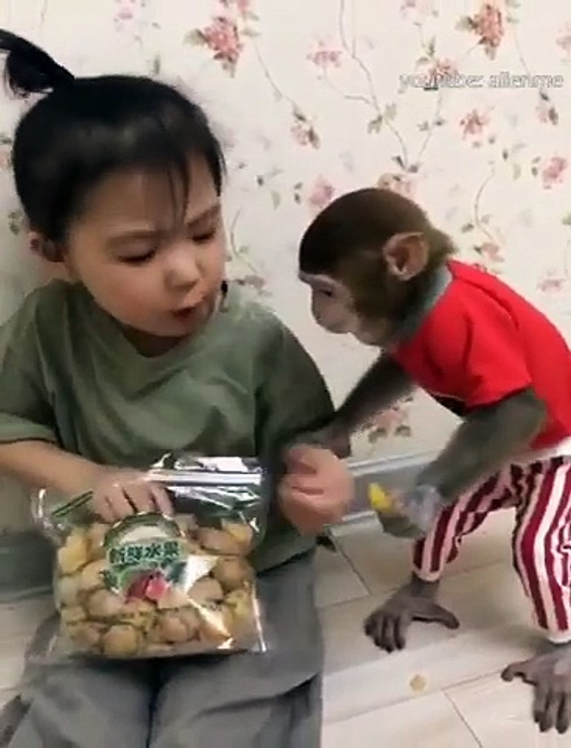 Kid Play with Cute monkey