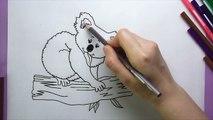 Koala Boyama, Koala Nasıl Boyanır, Coloring Koala