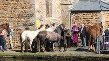 Baignade des chevaux à Goudelin