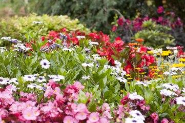 3 choses à faire dans son jardin en été