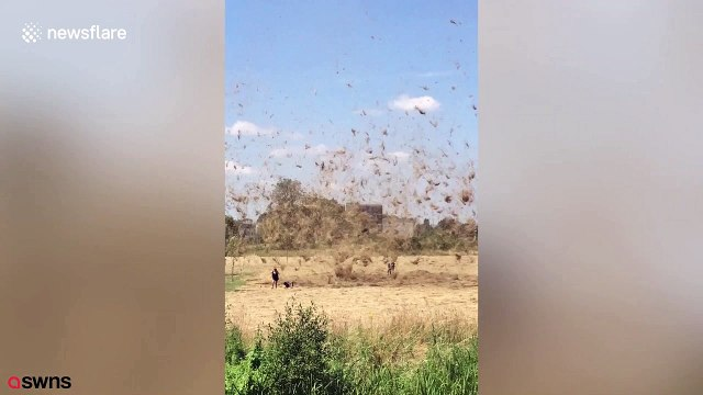 Hot air whips up mass of hay, blowing it around like tornado