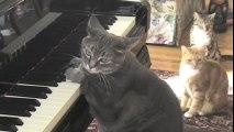 Catconcerto.  Mindaugas Piecaitis, Nora The Piano Cat