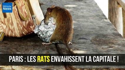 Paris : Les rats envahissent la capitale