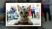 10 Times Asshole Cats Hilariously Photobombed Purrfect Shots