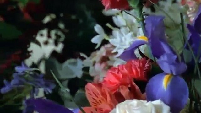 Everwood S01 - Ep12 Vegetative State HD Watch