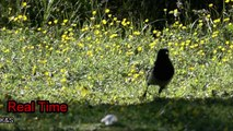 Incredible Slow Motion! Wild birds in 1000 fps slow motion with SONY RX 10 iii