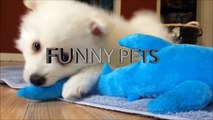 Cute Puppies   Lovable and Cute Puppies Part 2 Funny Pets