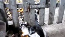 Cats and Kittens  Funny Cats and Kittens Together Part 2 Funny Pets