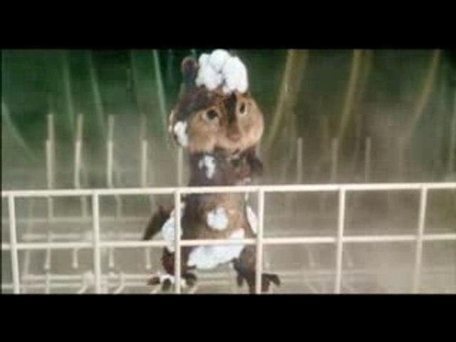 Alvin et les Chipmunks Extrait 1 : Cycle de rincage