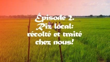 #Riz Local Episode 2. Recolté et traité chez nous !