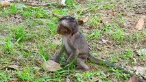Since Poor Baby Monkey Lori Head Trauma Mother do Not care From lori Monkey,