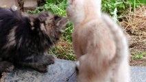 Das wahre Wesen unserer Hunde und Katzen Wie wild sind unsere liebsten Haustiere? Doku 2017