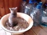 Ce chaton tombe dans les pommes en faisant ses besoins... Trop mignon