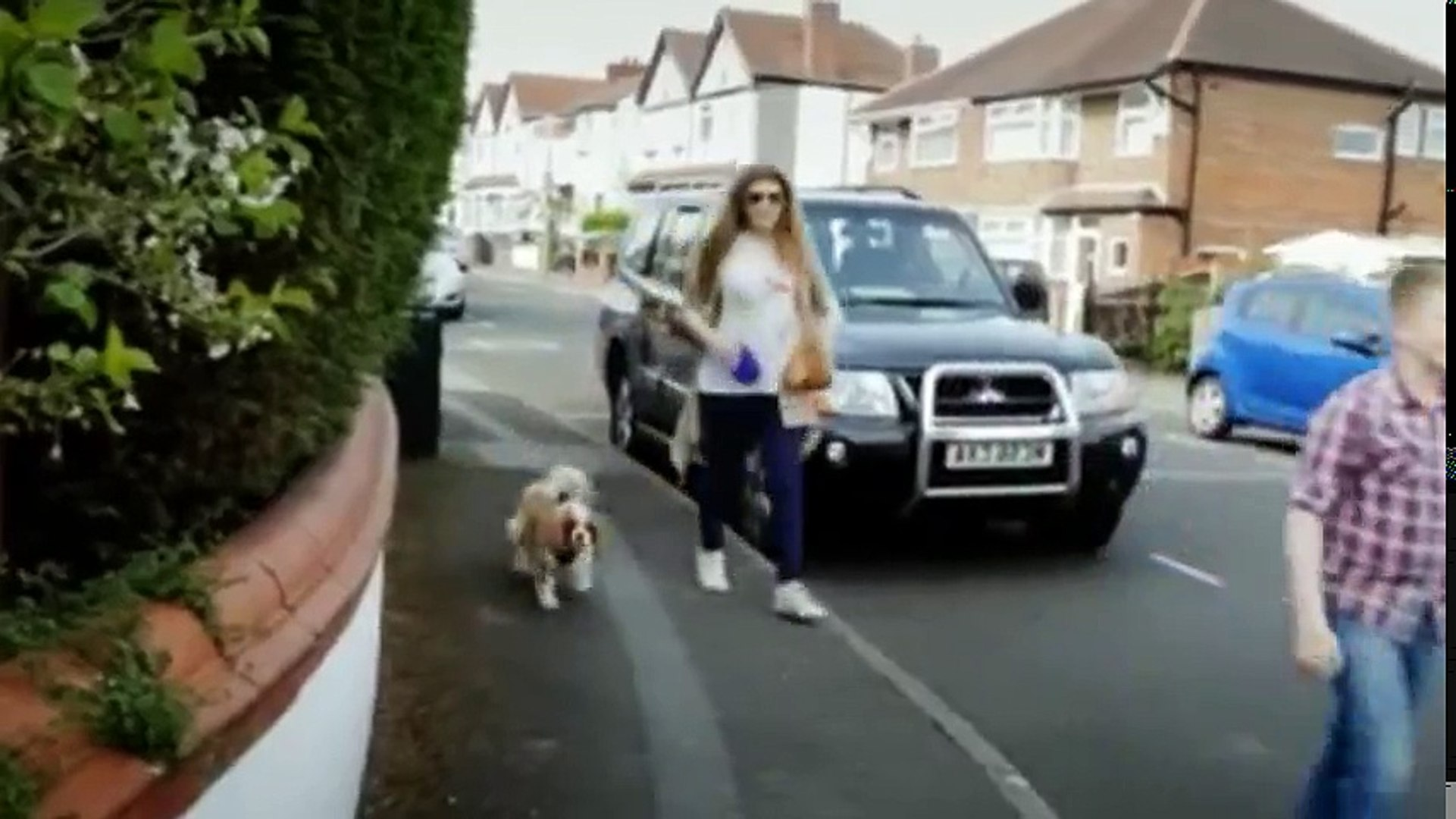 Dogs Their Secret Lives S01 - Ep01 Fat Dogs HD Watch