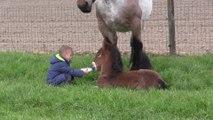 Cet enfant nourrit un poulain sous les yeux de sa maman qui apprécie beaucoup
