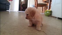 Cute Puppies   Lovable and Cute Puppies Part 1 Funny Pets