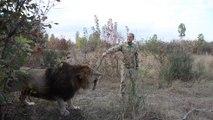 Quand tu prends un lion pour un chien... Va chercher le baton