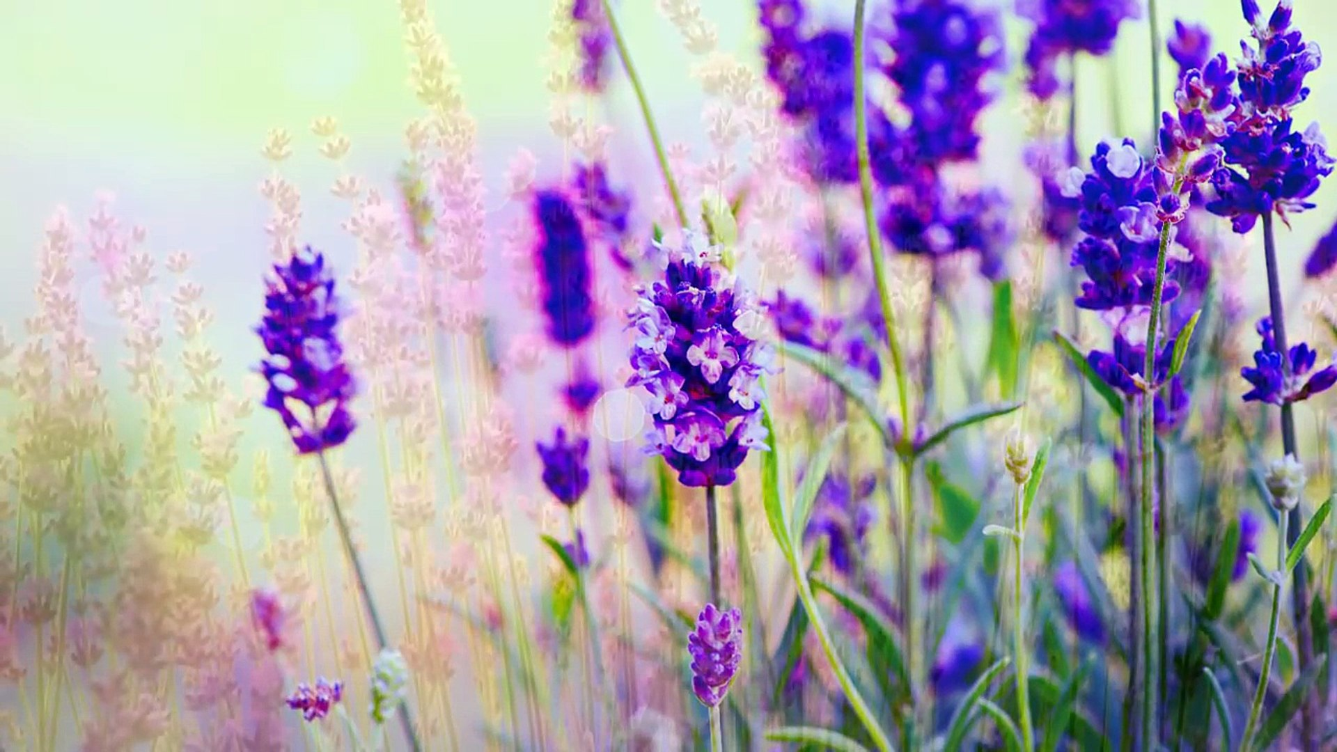 Music for Meditation, Relaxing Music, Music for Stress Relief, Soft Music, Background Musi