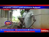 Snakes in SP office: Charmer caught snake: Sivagangai | Sathiyam TV News