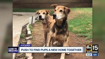 Dogs looking for forever home after nearly 10-years of living in shelters and foster homes