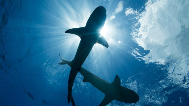 Rising Water Temperatures Have Sharks Swimming To The UK
