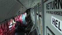 Les chevaux de Przewalski volent vers la Mongolie