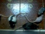 Vidéo des filles sorties dans la salle de bain 1