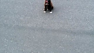 Beautiful cute dog puppy must watch