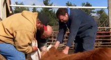 The Incredible Dr. Pol S08 - Ep01 Freezin' Pol'd HD Watch
