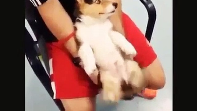 Cute pets funny video   funny pets fails 2017   cutest dog and cat   cute animals doing funny things