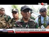 Petugas Musnahkan 15 Hektar Ladang Ganja di Aceh Utara