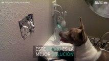 Perrito liquida ratones en casa