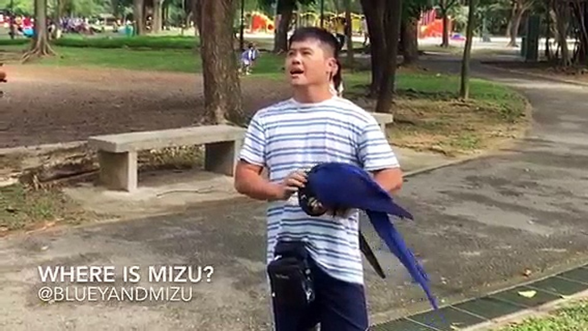 Bluey & Mizu: most playful and intelligent parrots play hide and seek