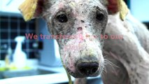 PUPPY LEFT STARVING IN A REMOTE AREA : CLEO RECOVERS VERY SLOWLY .... WATCH HER NOW