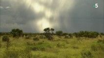 Les San, derniers chasseurs cueilleurs d'Afrique australe au Nord de la Namibie