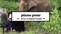 2 minutes de Chopin au piano pour bercer des éléphants aveugles de Thaïlande