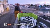 Pêche : l'île d'Oléron sauvée par le haut de gamme