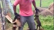 Des chiots pas très sympa avec leur maitre
