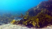 Hyams Beach dive 14 June 18